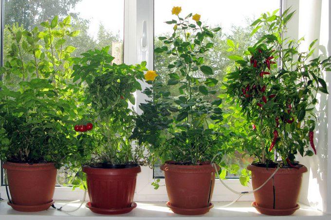 Какие растения вырастить в домашних условиях 506