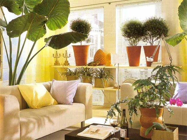 Комнатные растения для здоровья